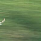 In Flight by Lennox George