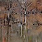 Scenic Reflection  by vasu