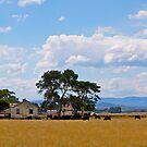 Abandoned farmhouse, Cardinia Swamp, Gippsland, Victoria.. by johnrf