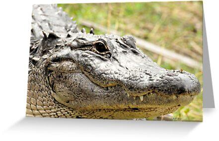 Gator Close by Jeff Ore