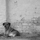 The Watchdog by redscorpion