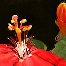 A Passion for flowers .. Passiflora Incarnata by Michael Matthews