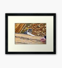 Small kitten playing in the autumn park Framed Print
