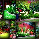Walk in my garden by Karlientjie