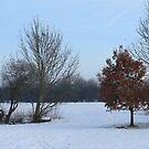 Winter Walk by David White