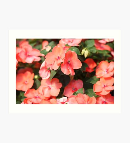 Peach Colored Flowers Art Print
