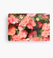 Peach Colored Flowers Metal Print
