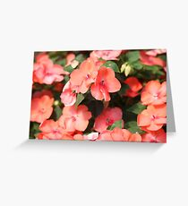 Peach Colored Flowers Greeting Card