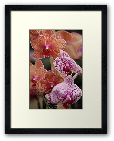 Orchids by Thomas Murphy