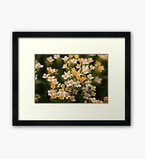 Yellow and White Flowers Framed Print
