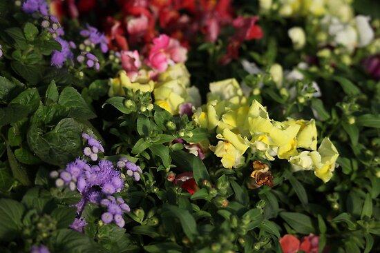 Field of Flowers by Thomas Murphy