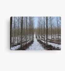 The Snow Trail Canvas Print