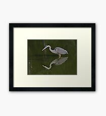 Great Blue Heron on the Hunt, High Park, Tortonto, Ontario Framed Print