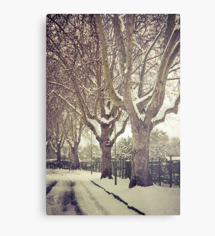 Tree Lined Metal Print