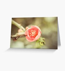 Winter Bloom  Greeting Card