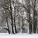 A Meeting of the Trees by mikebov