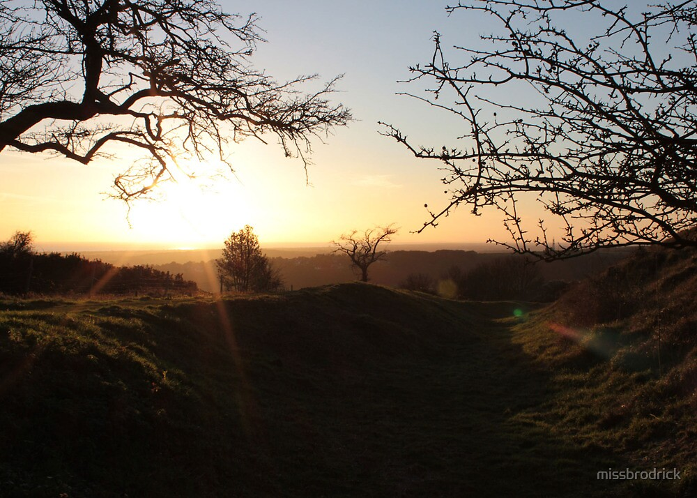 Dawn Breaking Through Winter Trees by missbrodrick