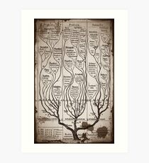 Tree Chart Plantae Protista and Animali Art Print