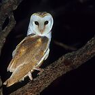 Barn Owl  by naturalnomad