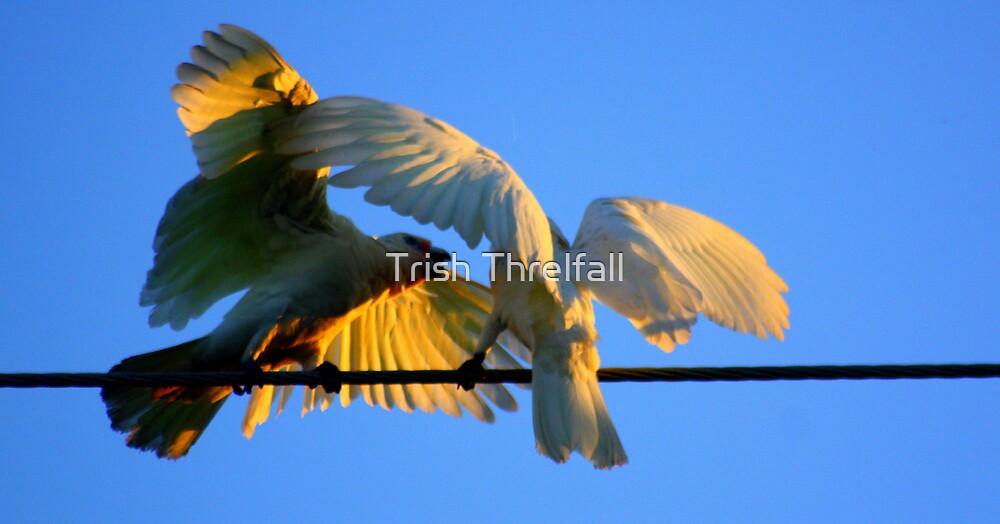 birds on a wire  by Trish Threlfall
