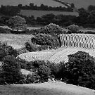 Patchwork fields, Blackstairs Mountains, County Carlow, Ireland by Andrew Jones
