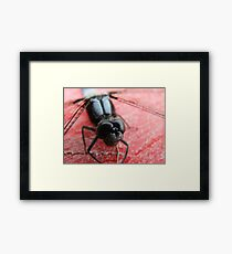 The Eyes Have It! Framed Print