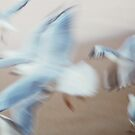 seagulls by Jackie Cooper