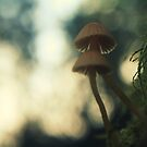 Turning stumps into mushroom factories by Joshua Greiner