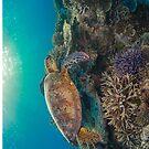 Sunset turtle by Kara Murphy