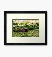 Groundhog Love Framed Print