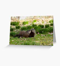 Groundhog Love Greeting Card