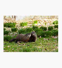 Groundhog Love Photographic Print