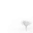 Little Foggy Tree by Ryan Smith