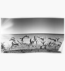 seagulls on takeoff Poster