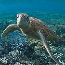 Serious turtle by Kara Murphy