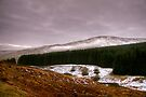 Winter in the Ettrick Valley by Christine Smith