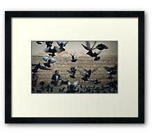 Flying lifes .. Framed Print