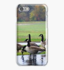 MY VISITORS - CANADA GEESE iPhone Case/Skin