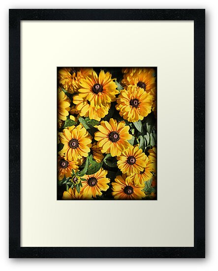 Abundance ~ Yellow Coneflowers / Black-eyed Susans against a Textured Background ~ Vintage Photography by Chantal PhotoPix