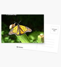 Butterfly in harmony Postcards