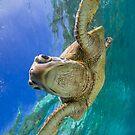 Sweet turtle by Kara Murphy