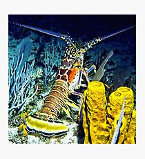 Caribbean Reef Lobster at Night Photographic Print