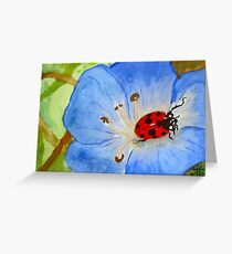LadyBug on Morning Glory Greeting Card