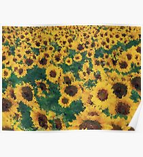 Vintage Sunflower painting art  Poster
