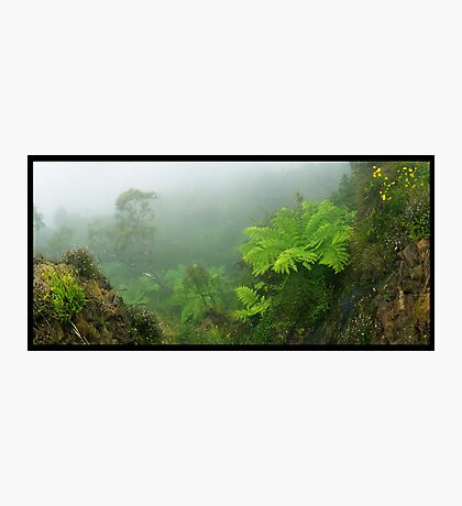 Govets Leap Fern Photographic Print