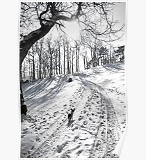 Lily walking up a snowy road Poster