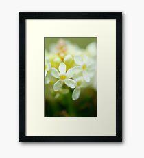 Tiniest Daisy Framed Print