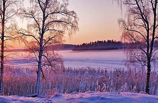 Frozen lilac by LadyFi