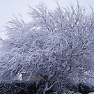 Snow covered willow by julieburnaby
