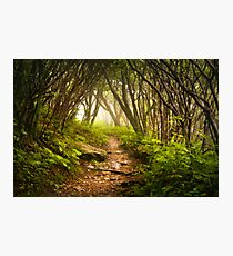 Appalachian Hiking Trail - Blue Ridge Mountains Forest Fog Nature Landscape Photographic Print